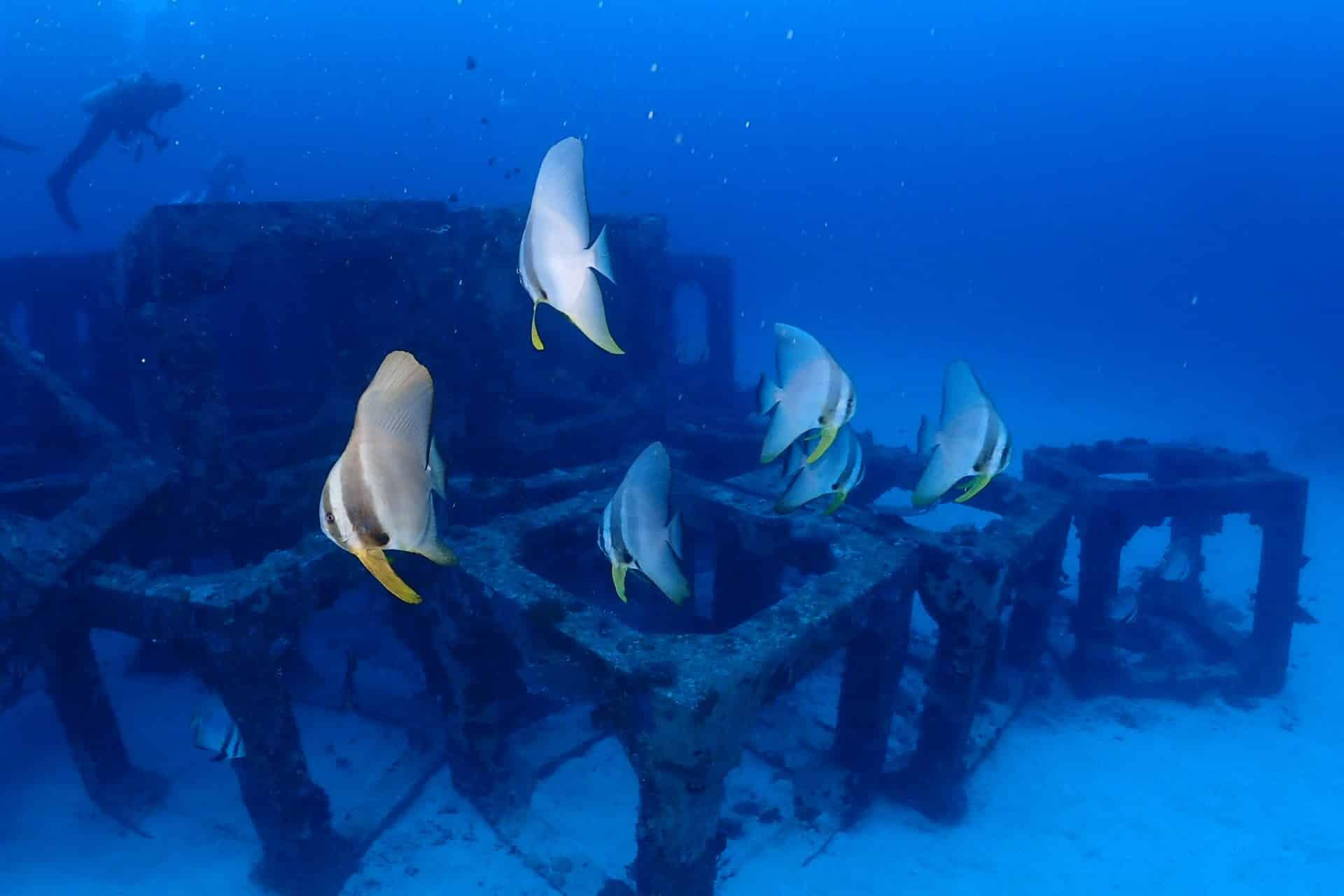 沖繩潛水 慶良間潛水