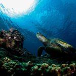小琉球潛水
