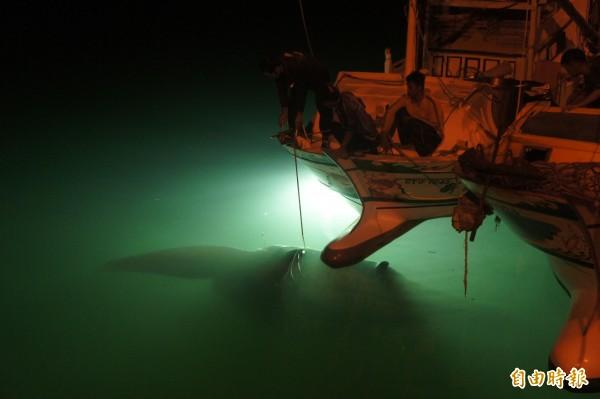 鯊魚、鬼蝠魟與漁民