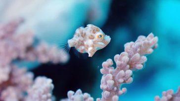 林音樂-微距-水下攝影-菲律賓-朗布隆-Romblon