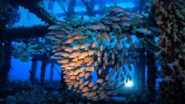 綠島 潛水 潛點 green island taiwan