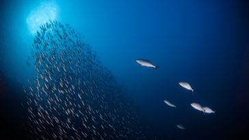 海洋的過去 現在 未來
