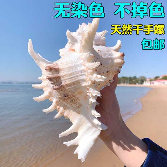 貝殼 貝殼圖鑑 海洋大學 海洋生物 海洋博物誌