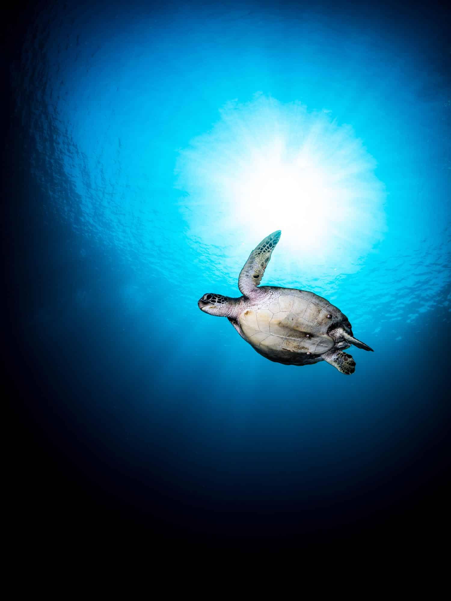 海洋博物誌 魚類辨識 海龜