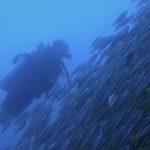 潛旅·行者 Scuba Strider 的簡介照片