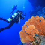 大堡礁潛水旅行 的簡介照片