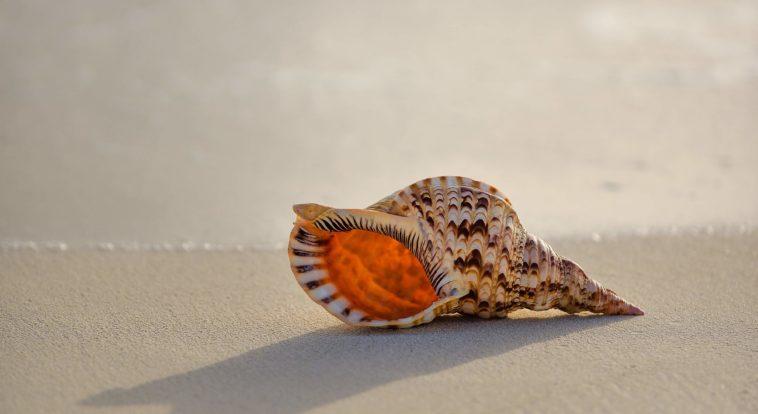 貝殼圖鑑-辨識-海邊的貝殼-認識-貝殼-辨識-海洋大學