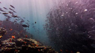 西巴丹潛水