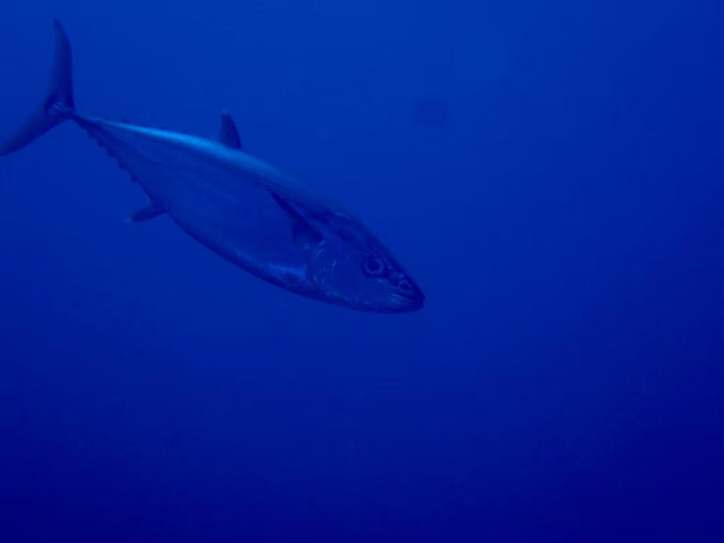 沖繩潛水,沖繩,青之洞,石垣島,日本潛水