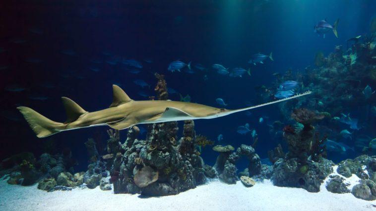 鯊魚圖鑑 shark